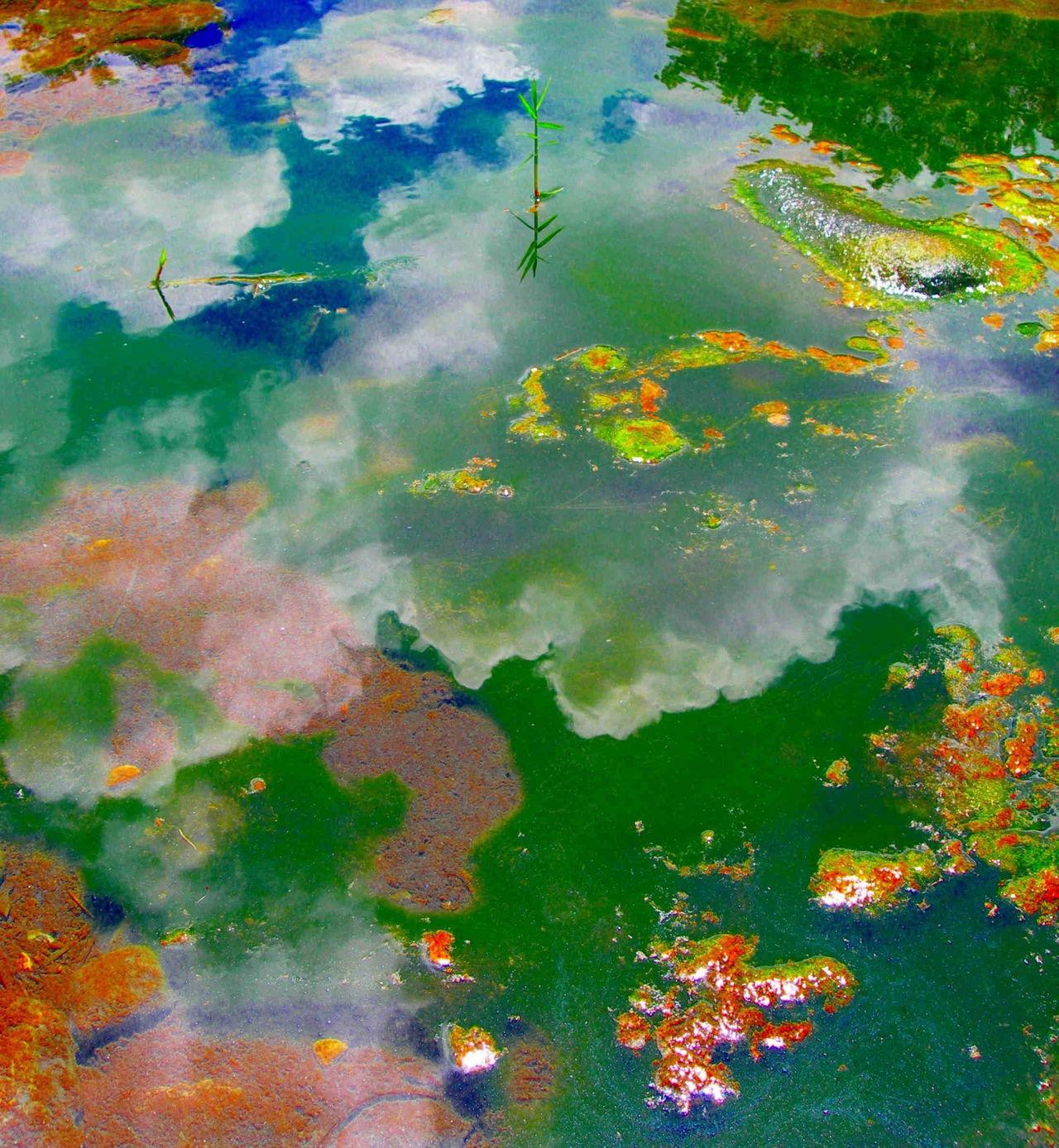 Beautiful stock photos of wallpaper, Abstract, Algae, Close-Up, Cloud
