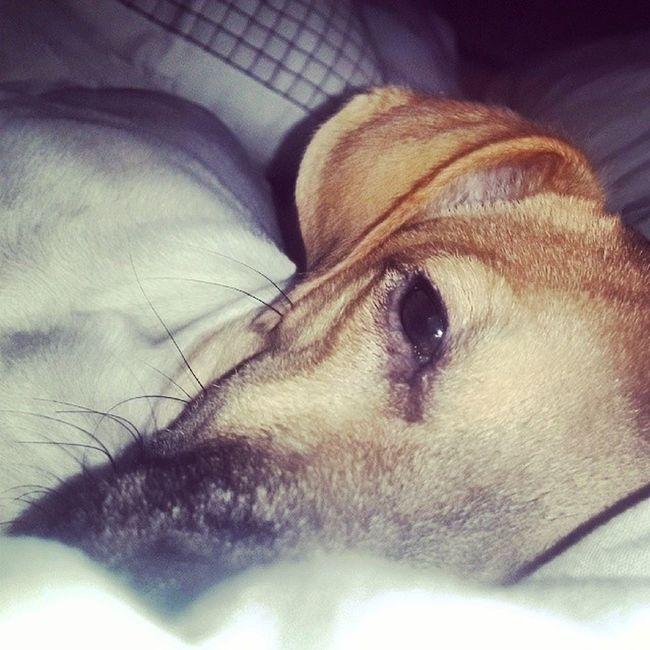 Puppynaptime Cuddlesintherain