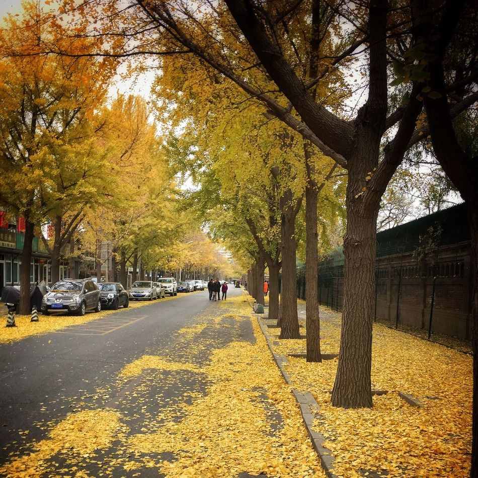 IPhoneography Perfect Day Beijing 二环路 Autumn Autumn Leaves