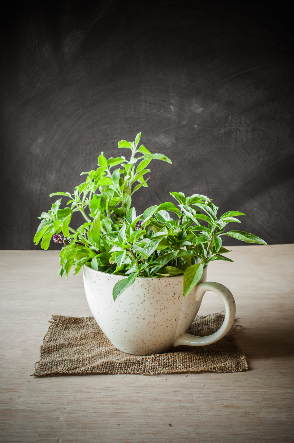Background Basil Ceramic Close-up Concept Conceptual Cup Food Food Stylist Freshness Growth Healthy Eating Herb Idea Indoors  Leaf Leaf 🍂 Nature No People Plant Raw Food Studio Shot Table Vegetable Wood - Material