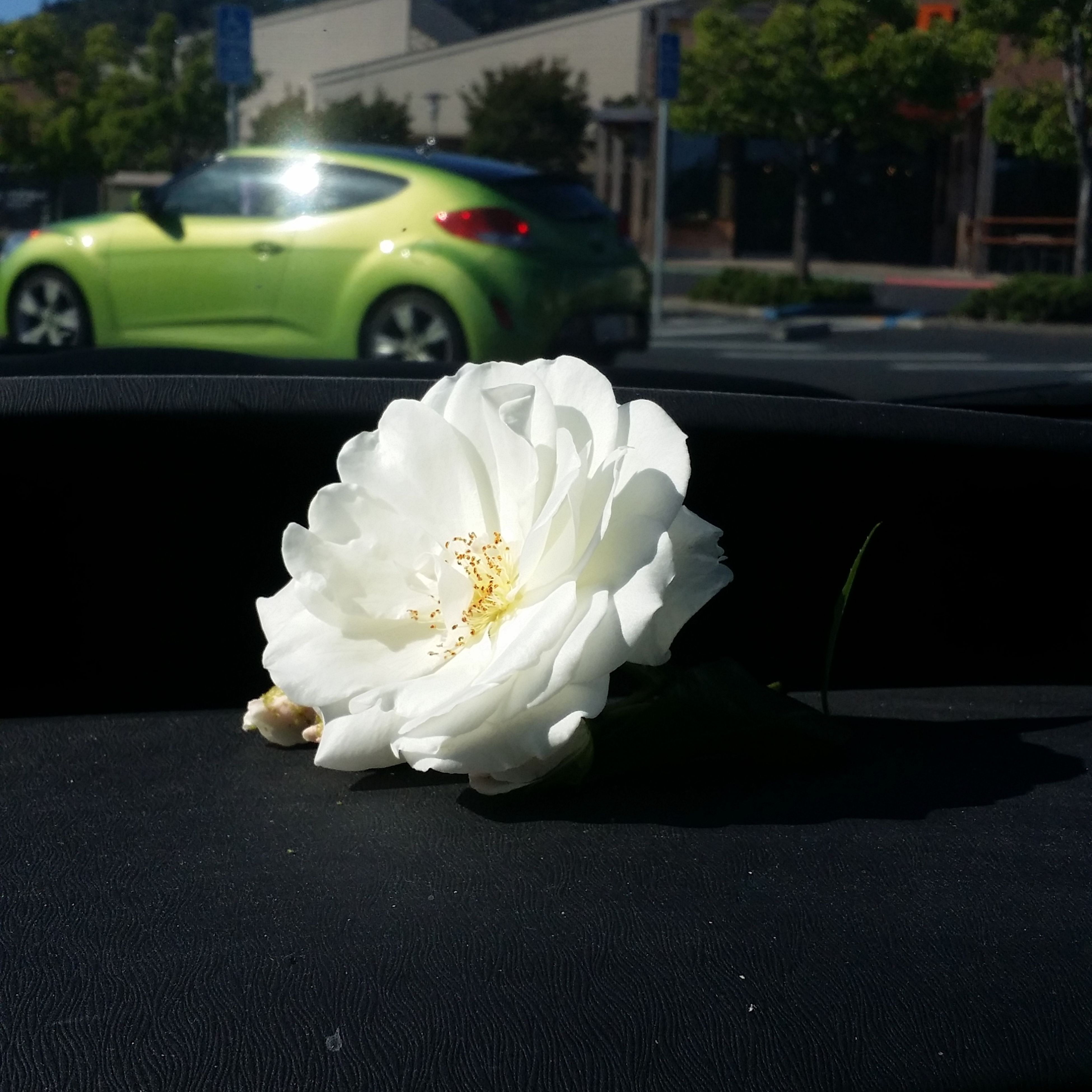 flower, transportation, road, freshness, petal, land vehicle, flower head, car, mode of transport, street, close-up, white color, fragility, single flower, beauty in nature, outdoors, nature, no people, city life