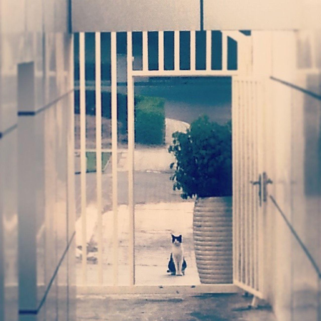 Cat Door Waiting Black white streetcat abudhabi albateen uae
