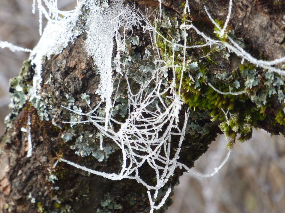 Beauty In Nature Close-up Day Focus On Foreground Fragility Freshness Nature No People Outdoors Spider Web Spider Webs Textured  Tree Tree Trunk