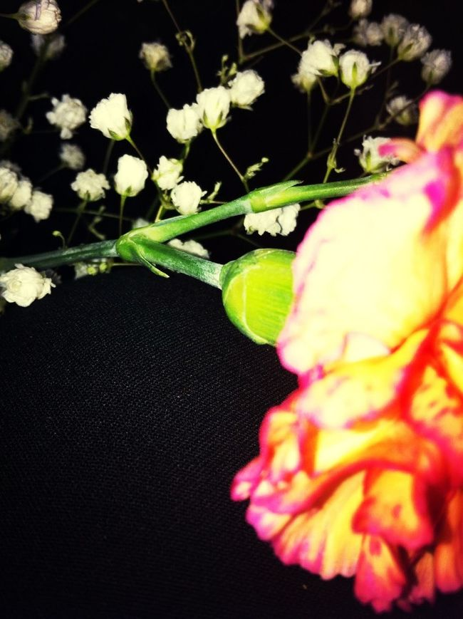 Flowers From Papaws Funeral.