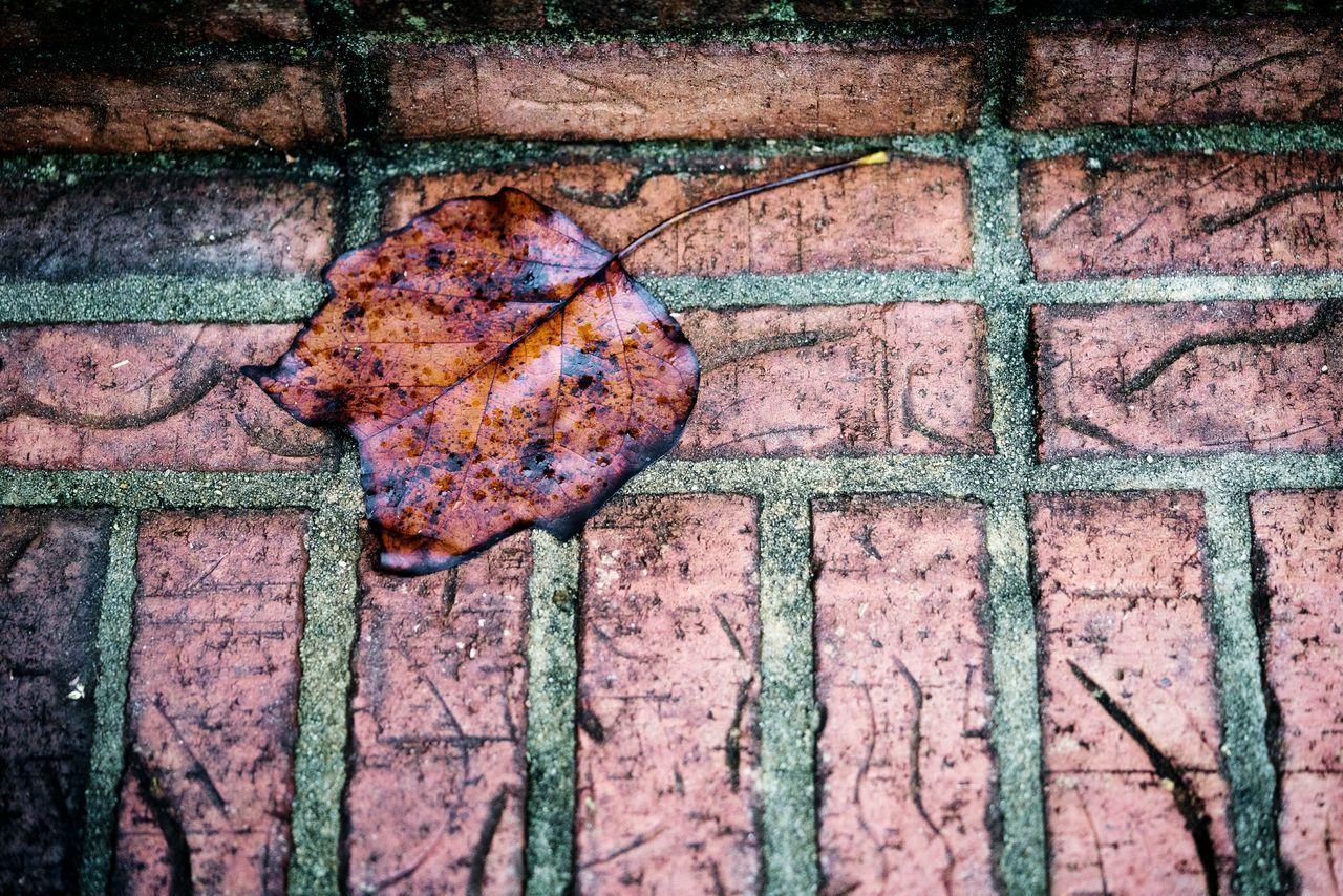 Maple Leaf Pattern No People Bricks Brickporn Brickwork  Autumn🍁🍁🍁 Autumn Colours Fall Theme Fall Beauty Fallen Leaf Reddish Orange
