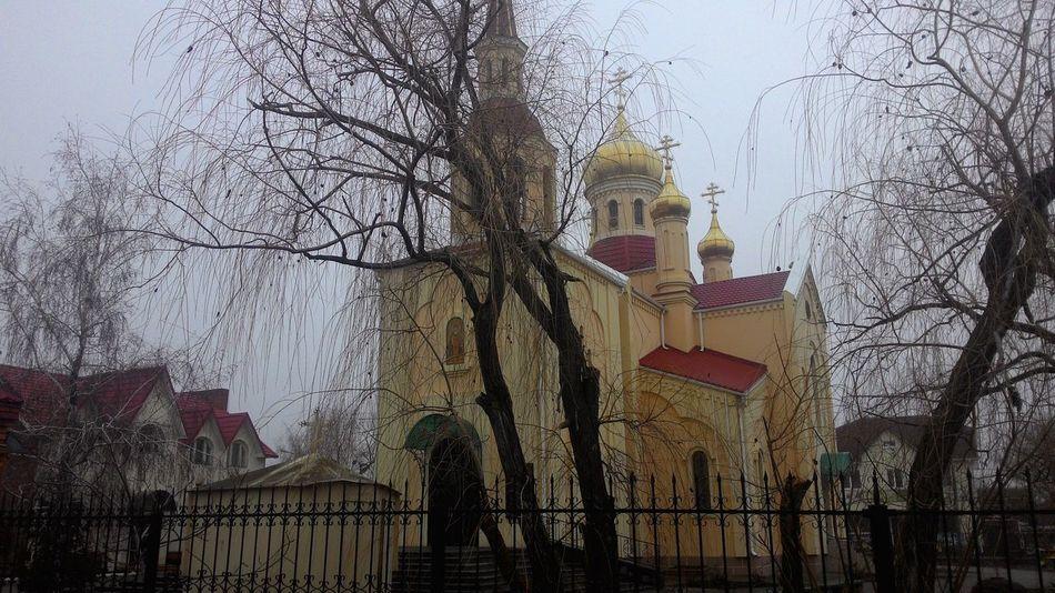 Mist temple Trees