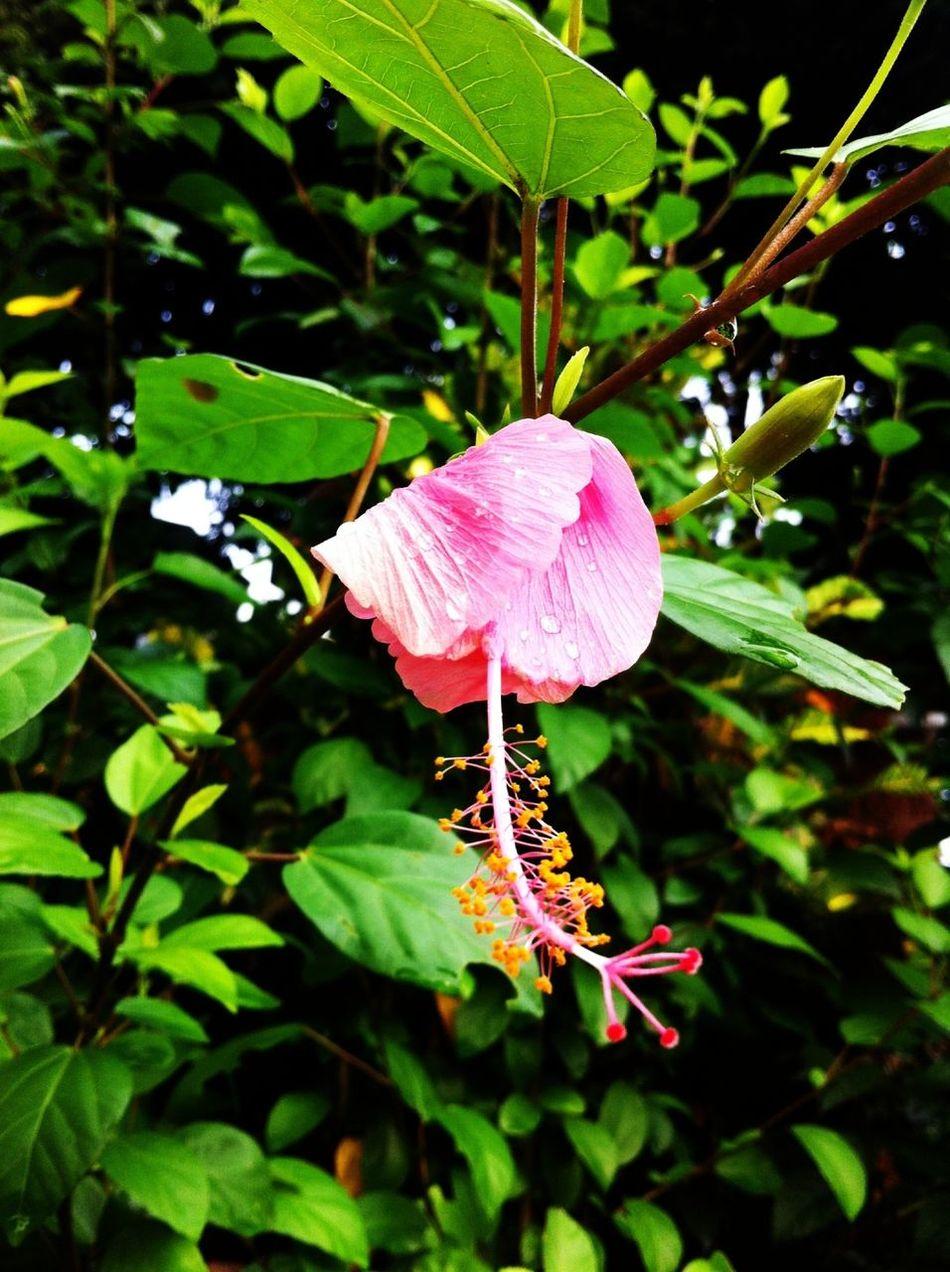 Raining Day Fresh Air Tgif Flower