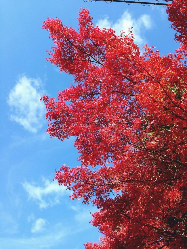 Kyoto Cloud And Sky Red red