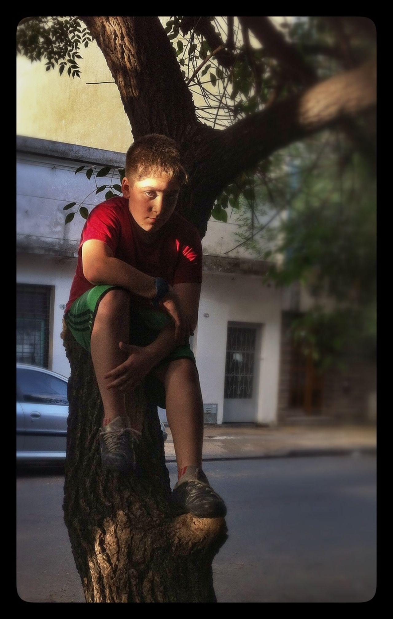 Desde el árbol Hugging A Tree Tree Kidsontrees