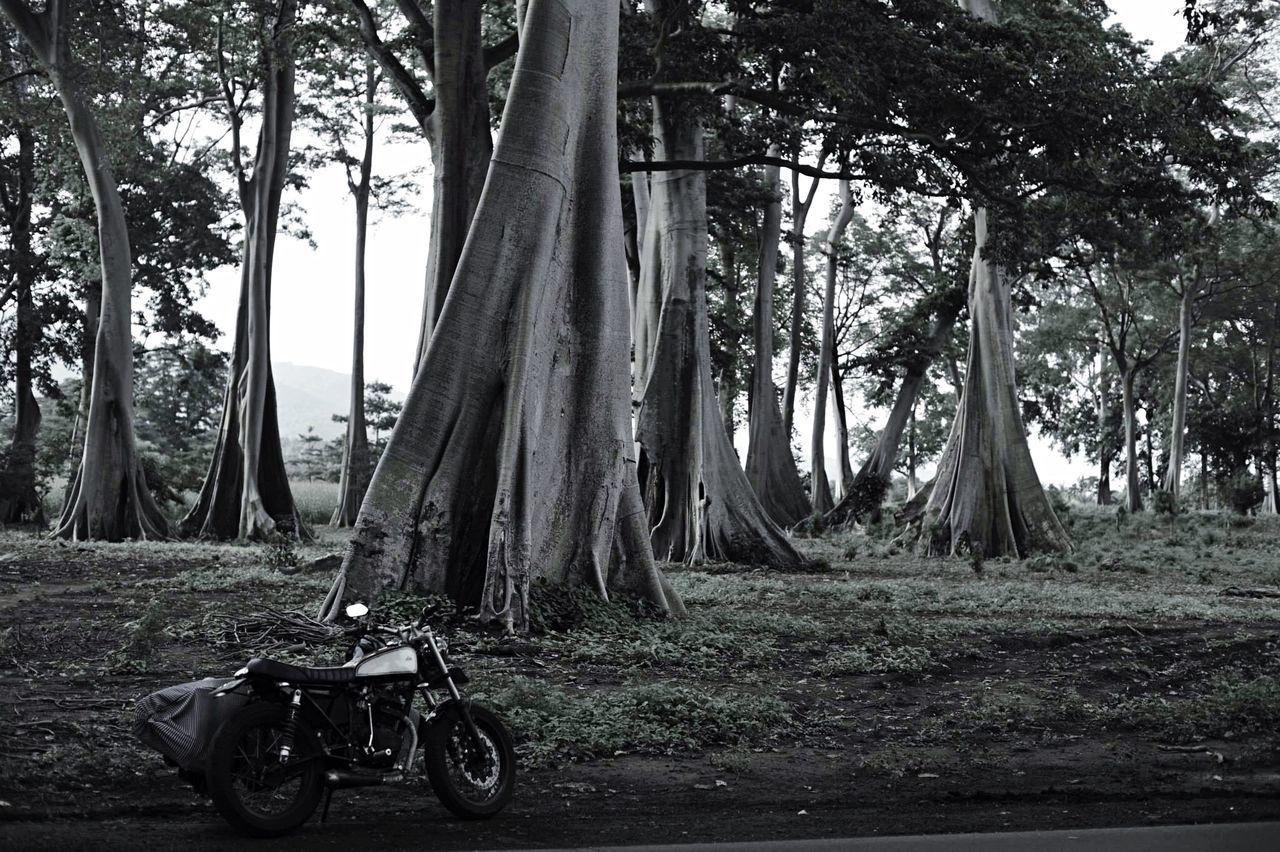 Wanderlust Tales Of Coffee Motortrip Motorbike Islandlifestyle The Explorer - 2014 EyeEm Awards Islandhopping