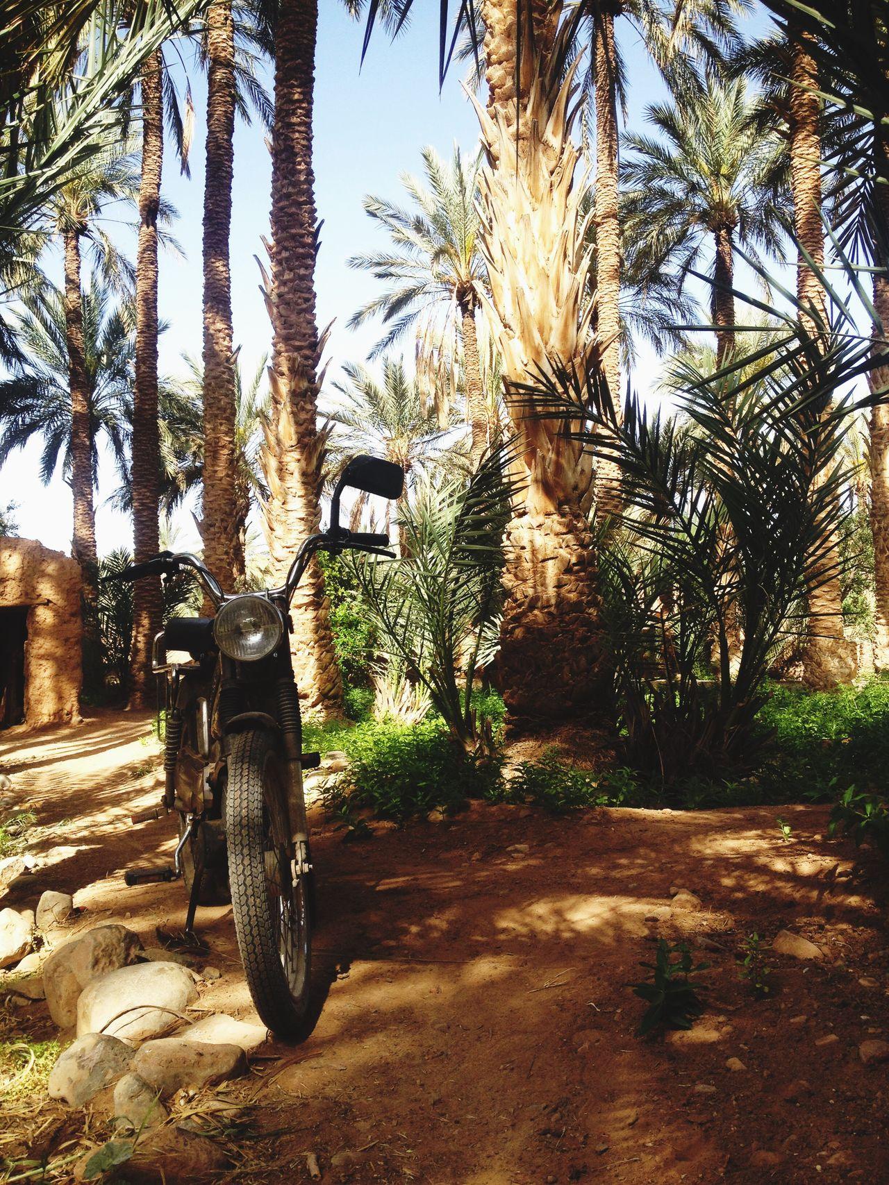 FIGUIG LA VILLE OUBLIE ♡♥♡ Figuig Maroc Morroco Palmier