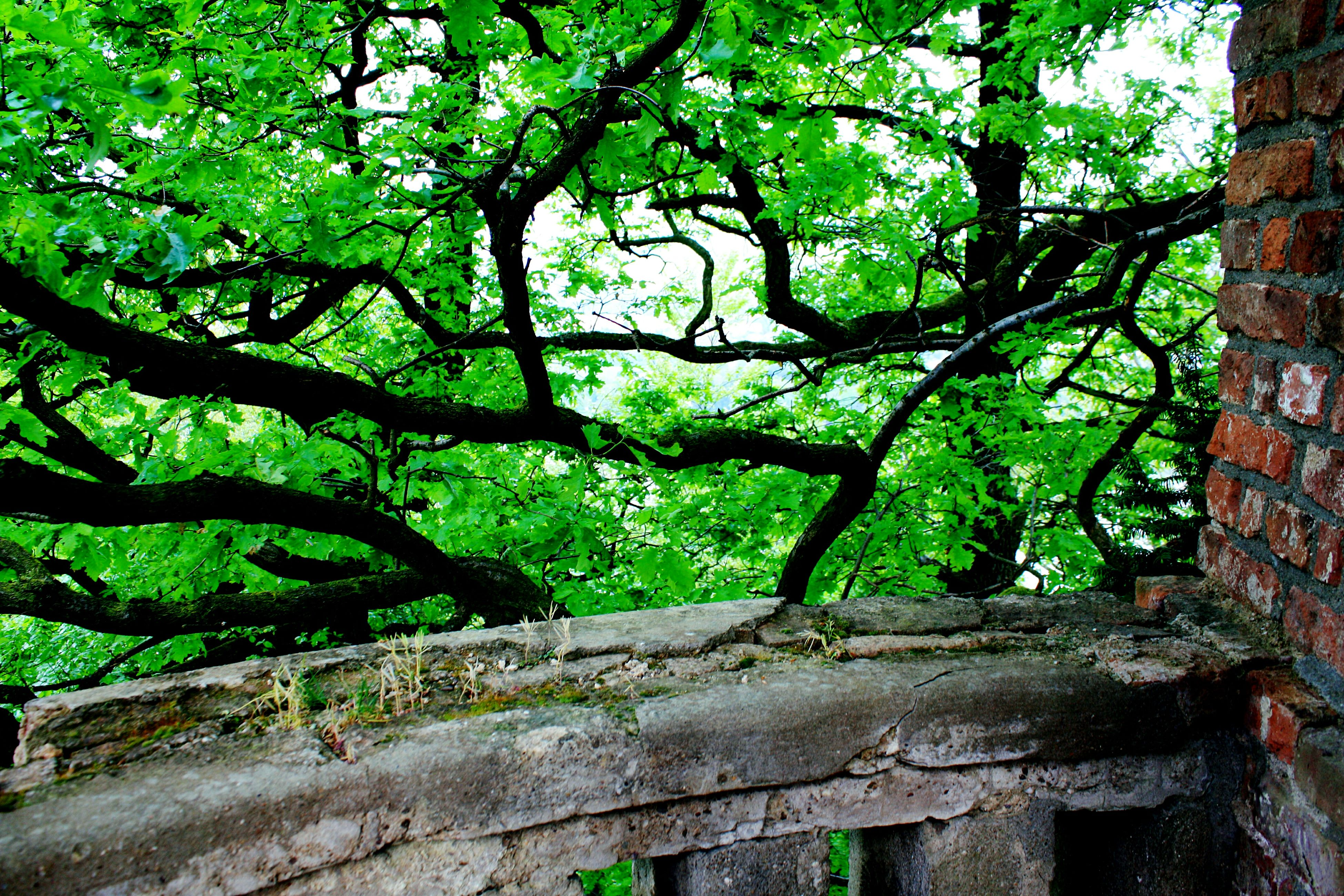 tree, growth, branch, green color, tree trunk, nature, low angle view, tranquility, forest, wood - material, outdoors, day, beauty in nature, built structure, no people, lush foliage, plant, leaf, green, sunlight