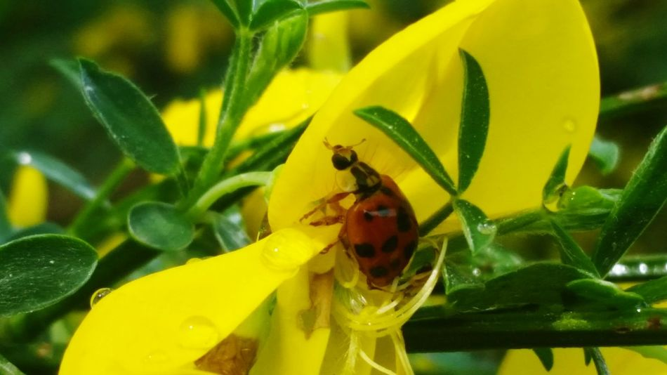 Nature's Diversities Bugs World Small And Big Small Things Green Nature Flowers, Nature And Beauty From My Point Of View Check This Out
