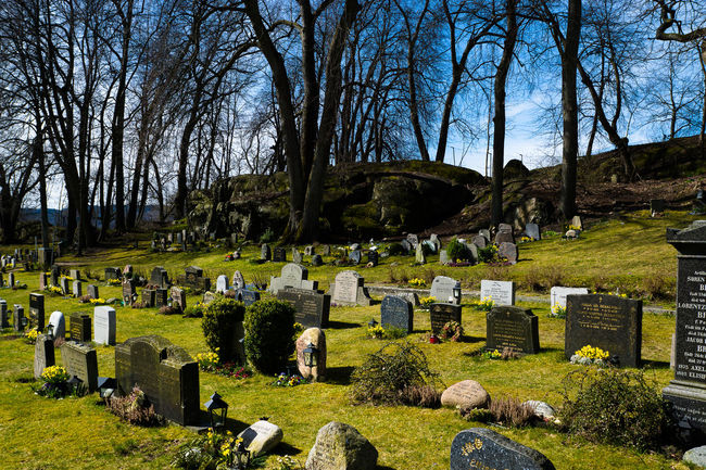 Bare Tree Built Structure Cemetary Cemetery Day Death Drøbak Field Grass Graveyard Green Color Growth Headstone Landscape Nature Park - Man Made Space Sky Stone Material Sunlight Tombstone Tranquil Scene Tranquility Tree Tree Trunk