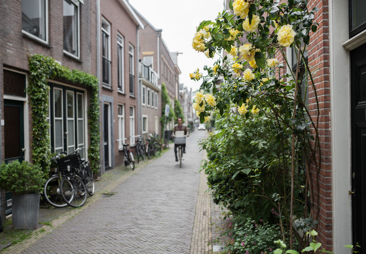 Architecture Building Exterior Built Structure City Cyclist Day Haarlem House Narrow Street No People Outdoors Roses Street Streetphotography Tree Yellow Rose