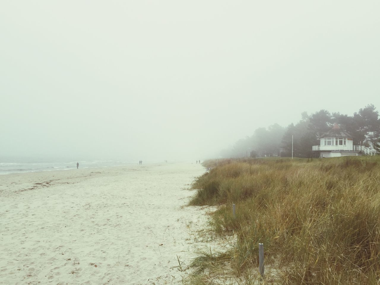 Grass Growing On Beach Against Clear Sky In Foggy Weather