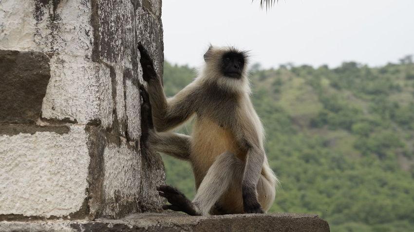 Animals In The Wild Animal Wildlife Animal One Animal Mammal Sitting Day Tree Outdoors Monkey Animal Themes No People Nature Monkeys Baboon Sky
