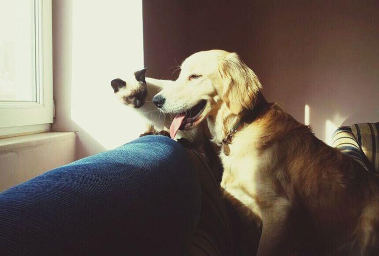 I Love My Dog Cute Pets Dog Love Dog Cat♡