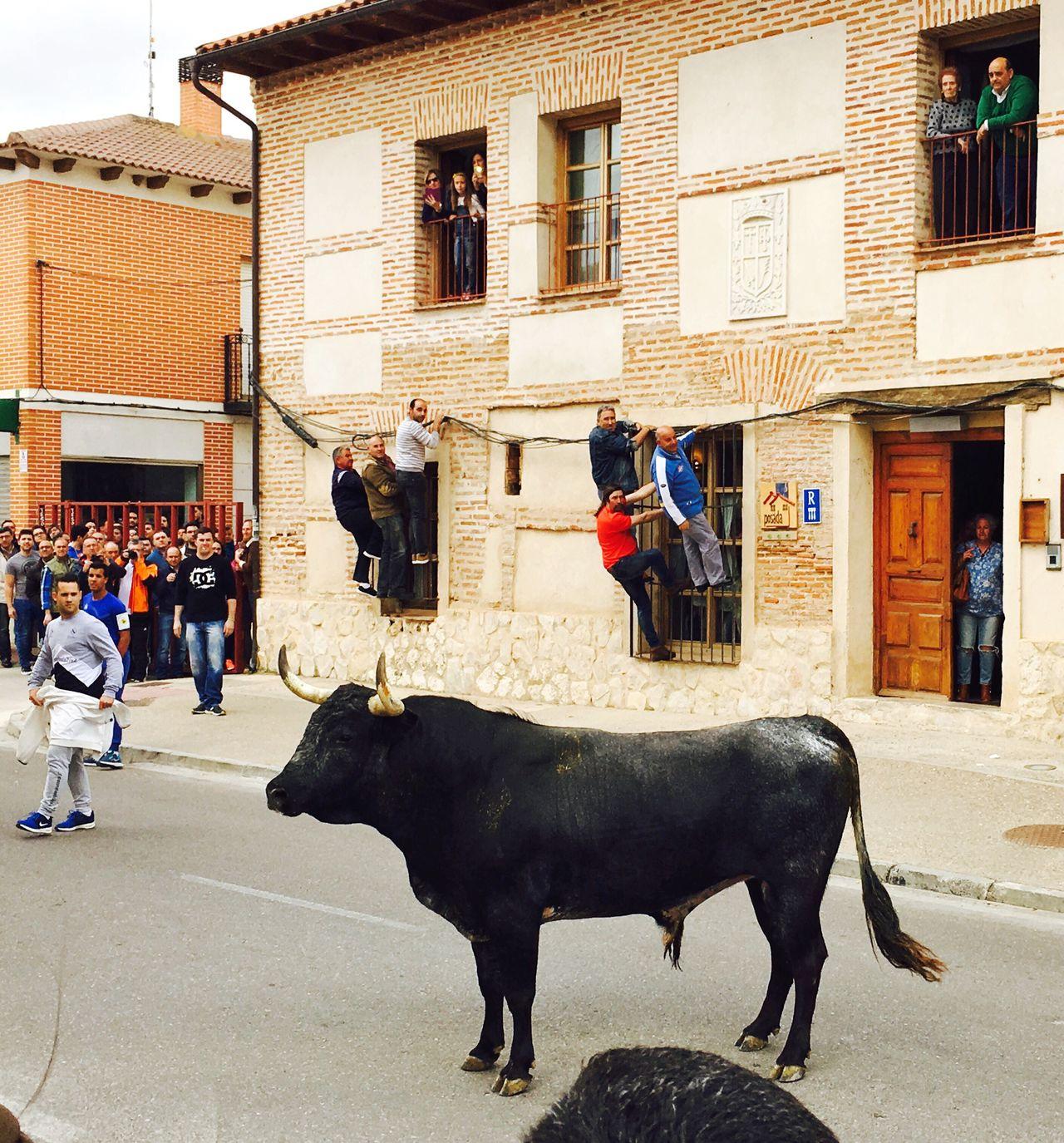 Toros Y Encierros Toros Bull Black Bull Encierros