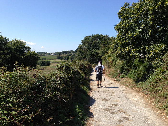 Adventure Blue Camino CaminodeSantiago Casual Clothing Clear Sky Countryside Farm Full Length Grass Growth Hiking Leisure Activity Lifestyles Men Nature Pilgrim Pilgrimage Plant SPAIN The Way Forward Tranquility Tree Trekking Walking