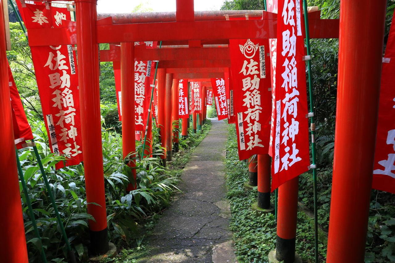 佐助稲荷 Inari Shrine TORII Torii Gate Gate No People Red Religion Road Approaching A Shrine Shrine Spirituality The Way Forward