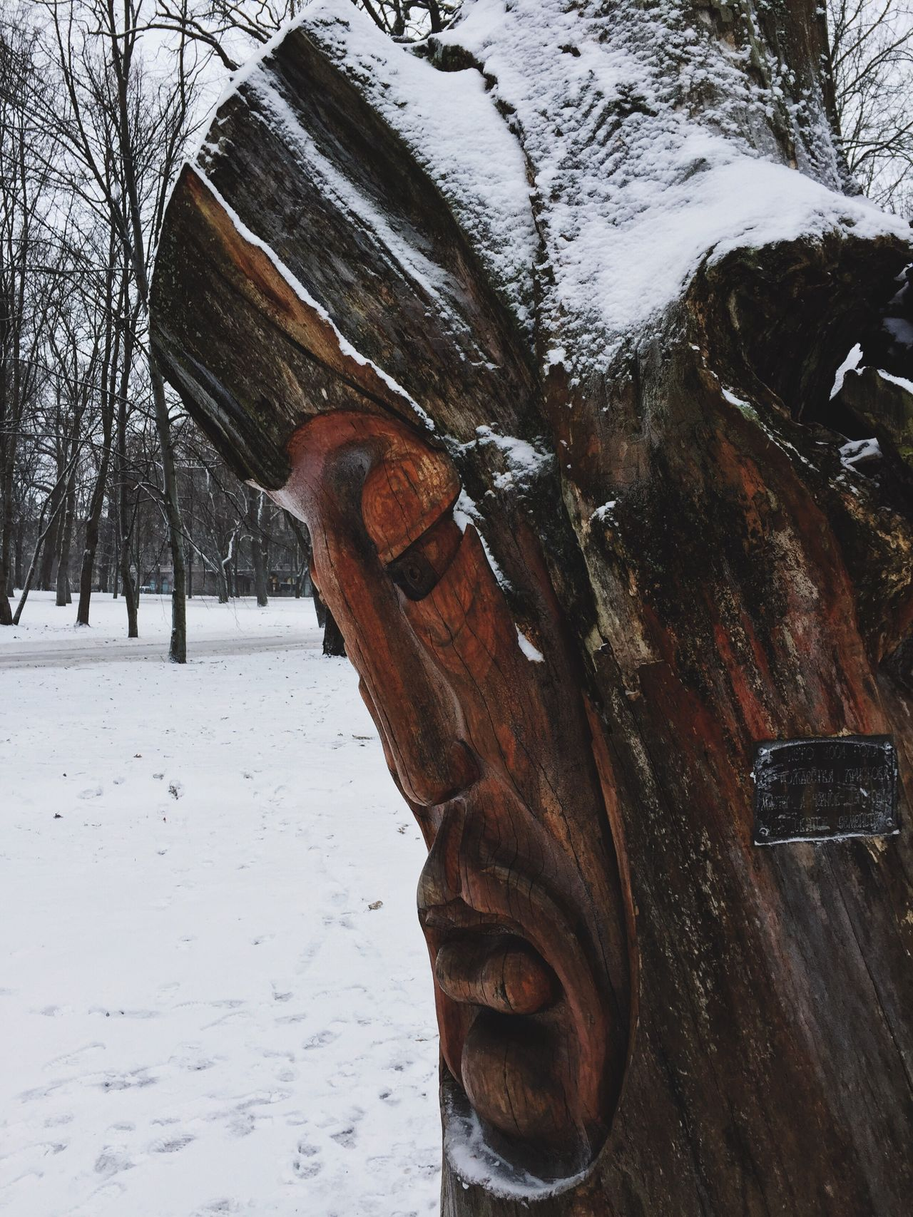 Snow Winter Cold Temperature Weather Tree Tree Trunk Nature Outdoors Day Wood - Material No People Close-up Beauty In Nature Totem Wood Russia Vyborg