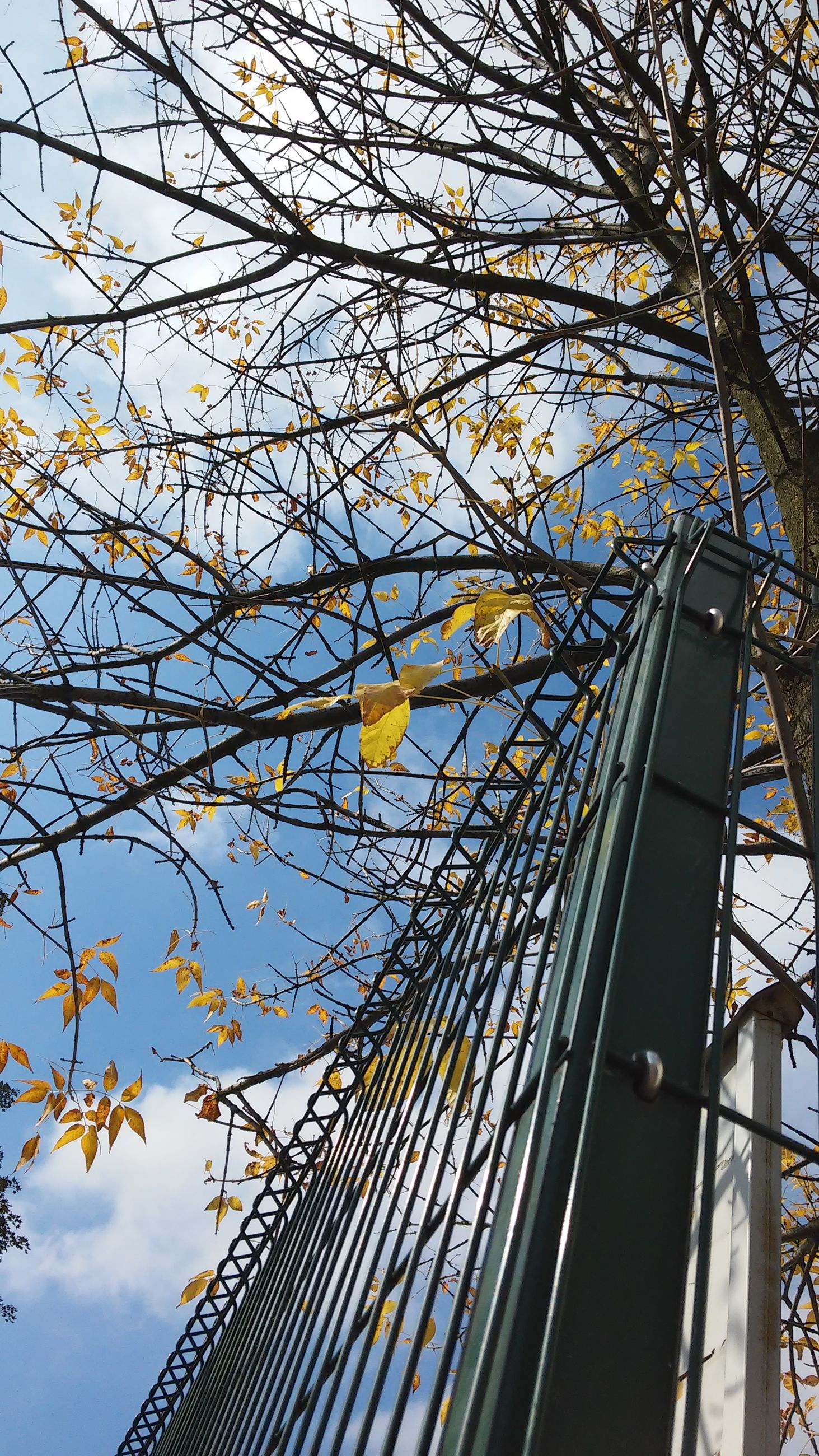 low angle view, sky, built structure, metal, tree, architecture, blue, branch, day, cloud - sky, protection, connection, yellow, outdoors, no people, metallic, pattern, cloud, chainlink fence, safety