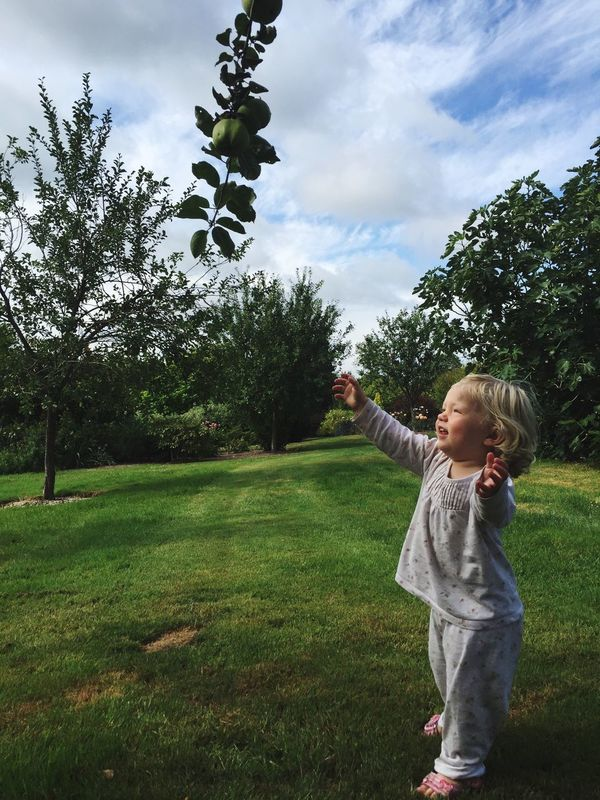 Picking Apples for Breakfast. Toddler adventures. Tree Childhood Grass Growth One Person Cloud - Sky Sky Casual Clothing Real People Playing Day Outdoors Nature Lifestyles People