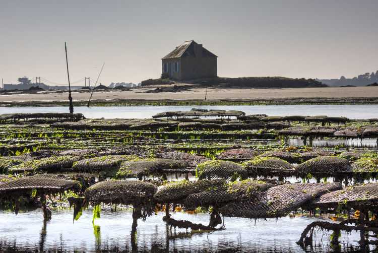 Bretagne Built Structure Huitres Saint Cado Tranquil Scene Tranquility Water
