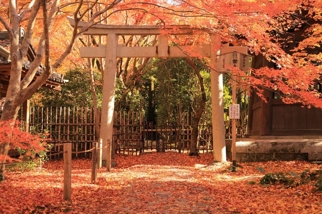 Red Rengeji Temple Kyoto Japan Autumn Leaf Change Architecture Tree Outdoors No People