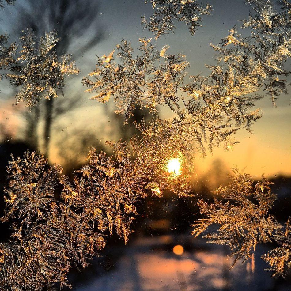 Eiskristalle Eis Ice Sunrise Sonnenaufgang Sonne Sun Licht