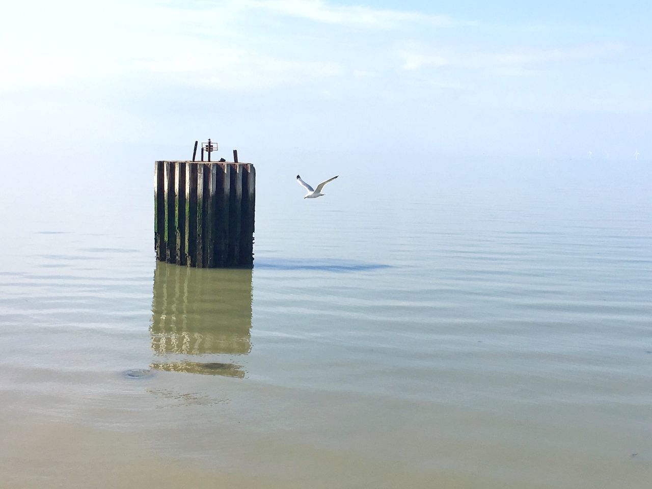 No People Reflection Waterfront Water Nature Sky Day Outdoors Beauty In Nature Animal Themes Bird Sea Seagull Whitstable Kent