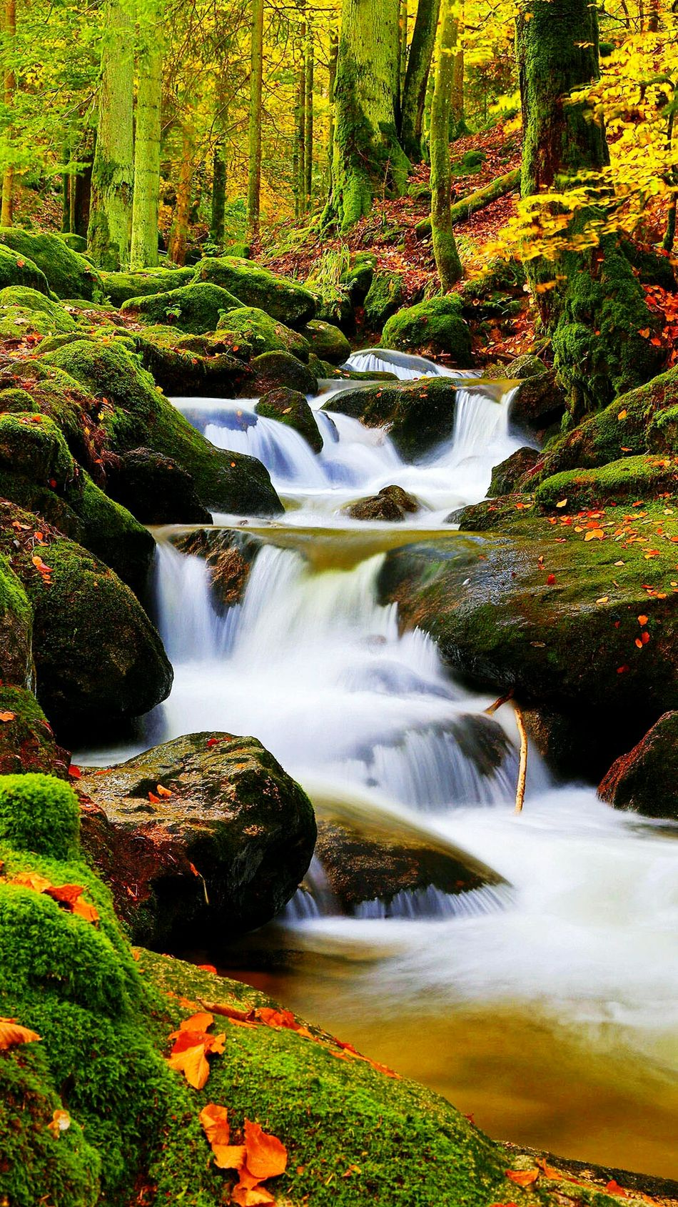 It's Perfect Nature Tree Scenics Beauty In Nature No People Forest Water Landscape Outdoors Waterfall Day