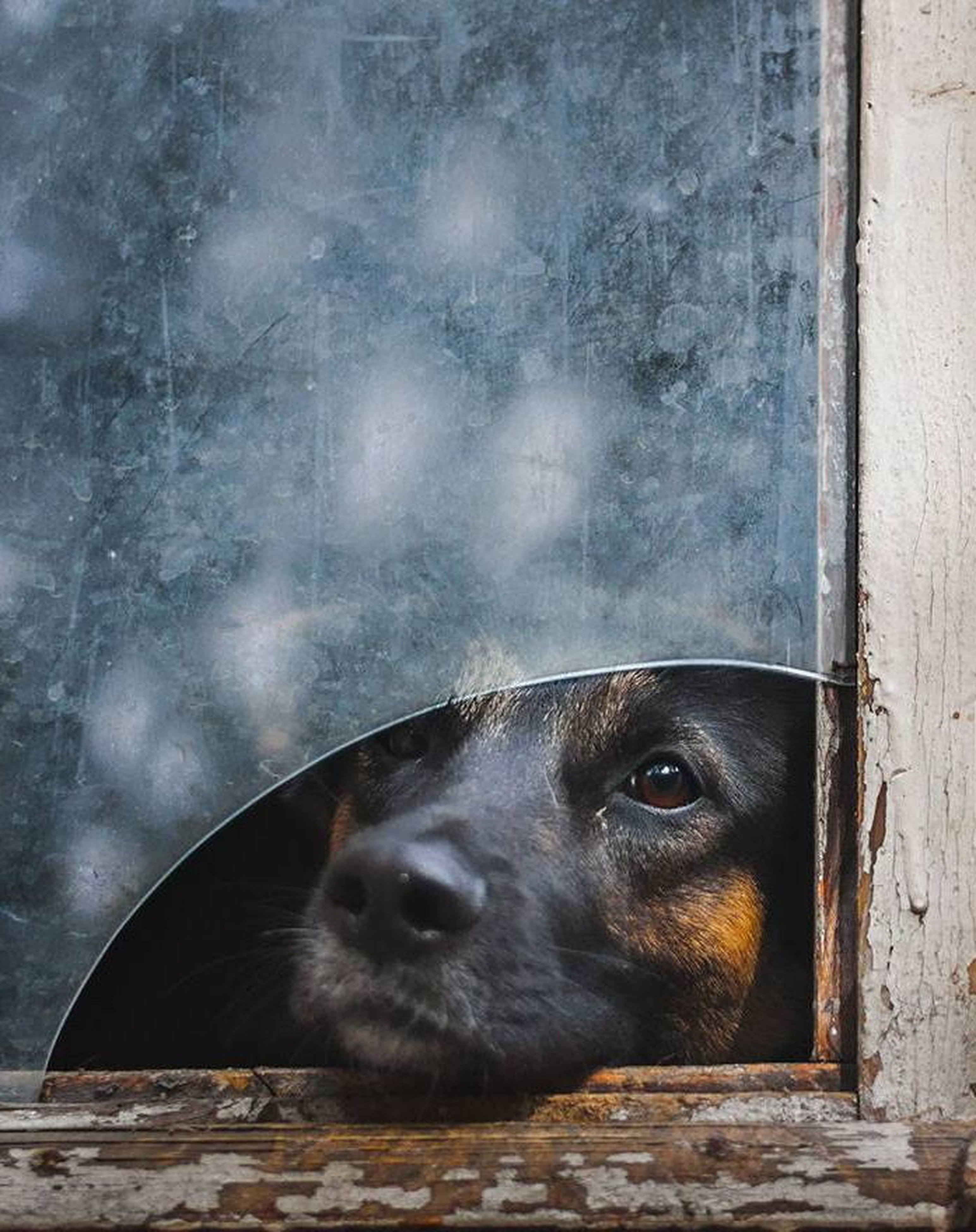 animal themes, one animal, mammal, domestic animals, pets, dog, portrait, looking at camera, animal head, close-up, outdoors, built structure, day, animal body part, no people, zoology, front view, wall - building feature, animal eye