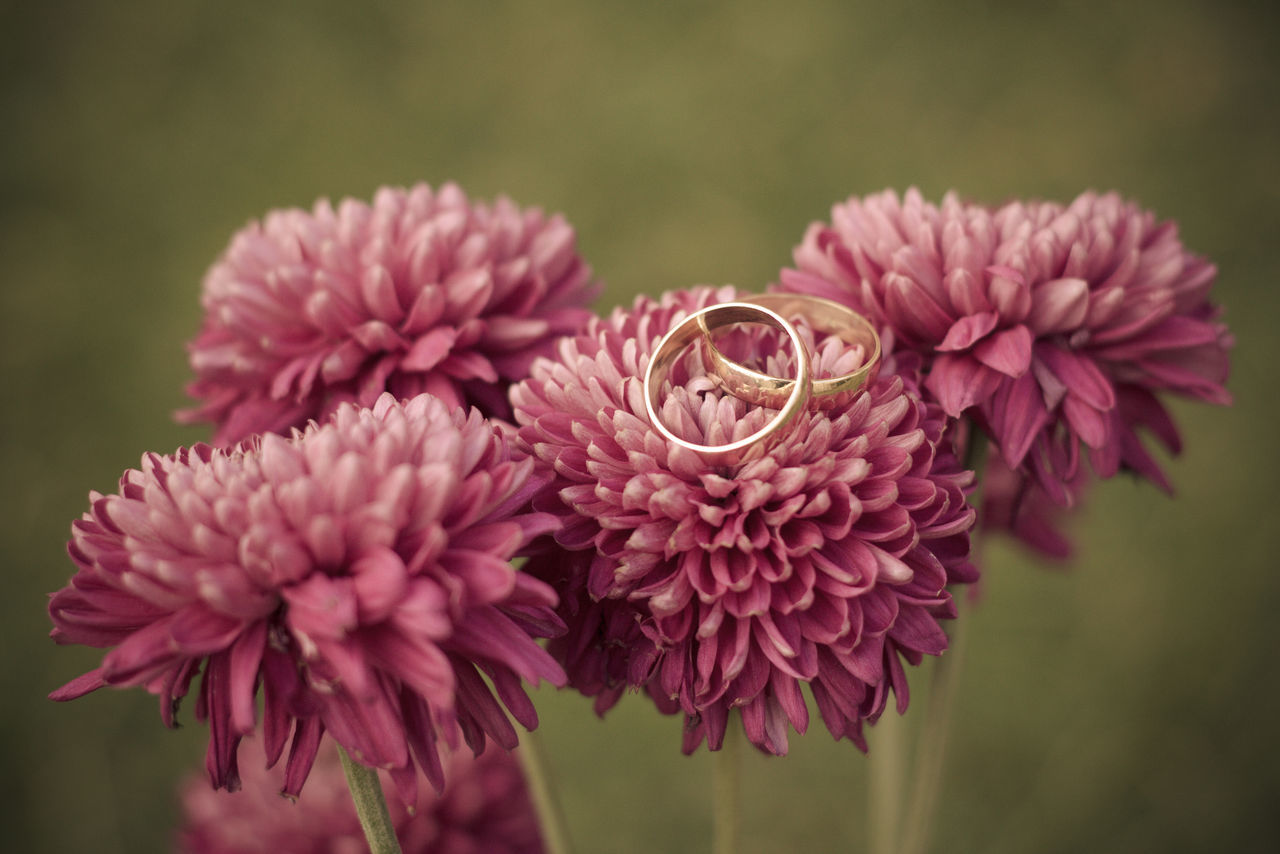 Close-Up Of Wedding Rings On Pink Flower