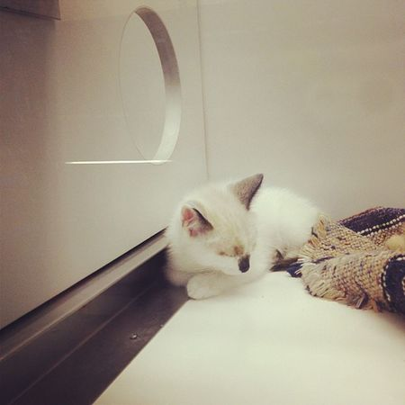 Kitty cat saturday? Kcs Petstore Kittens