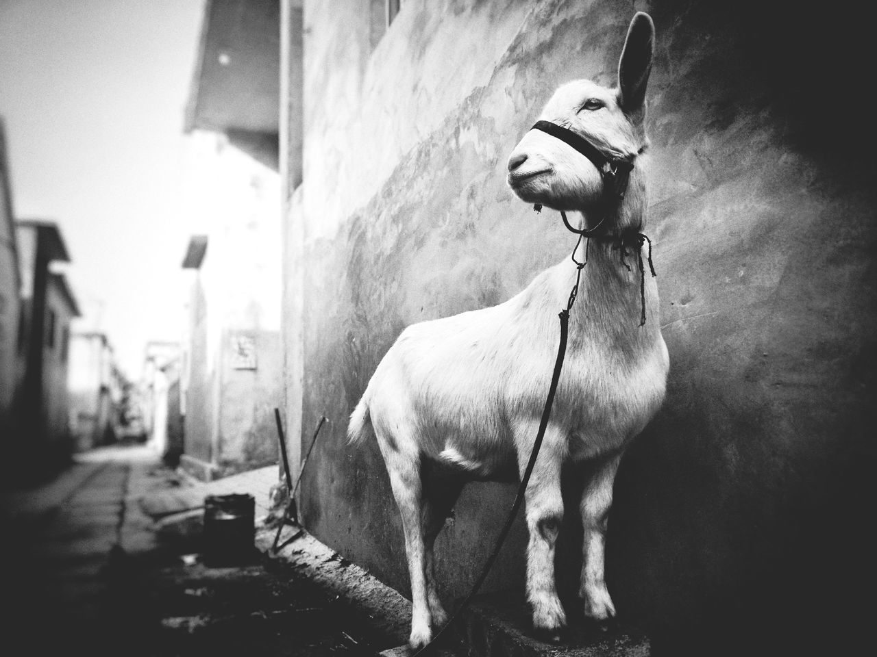 domestic animals, animal themes, mammal, one animal, dog, pets, built structure, no people, day, building exterior, architecture, outdoors, close-up