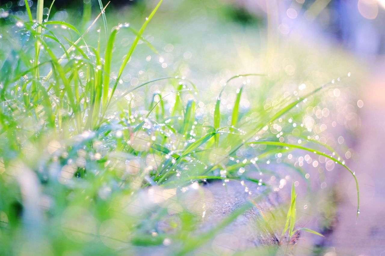 rainy day Nature Growth Plant Green Color No People Close-up Beauty In Nature Leaf Day Freshness Grass Blade Of Grass Outdoors Water Fragility after rain Rainy Days Rain Drops Rainy Season Grass Photography Grassfield