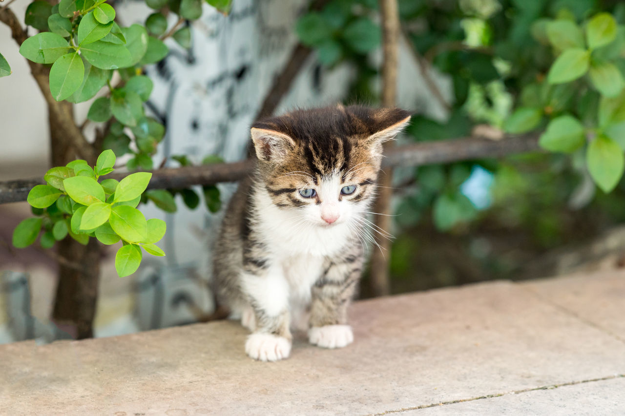 Beautiful stock photos of baby katzen, Animal Themes, Close-Up, Day, Domestic Animals