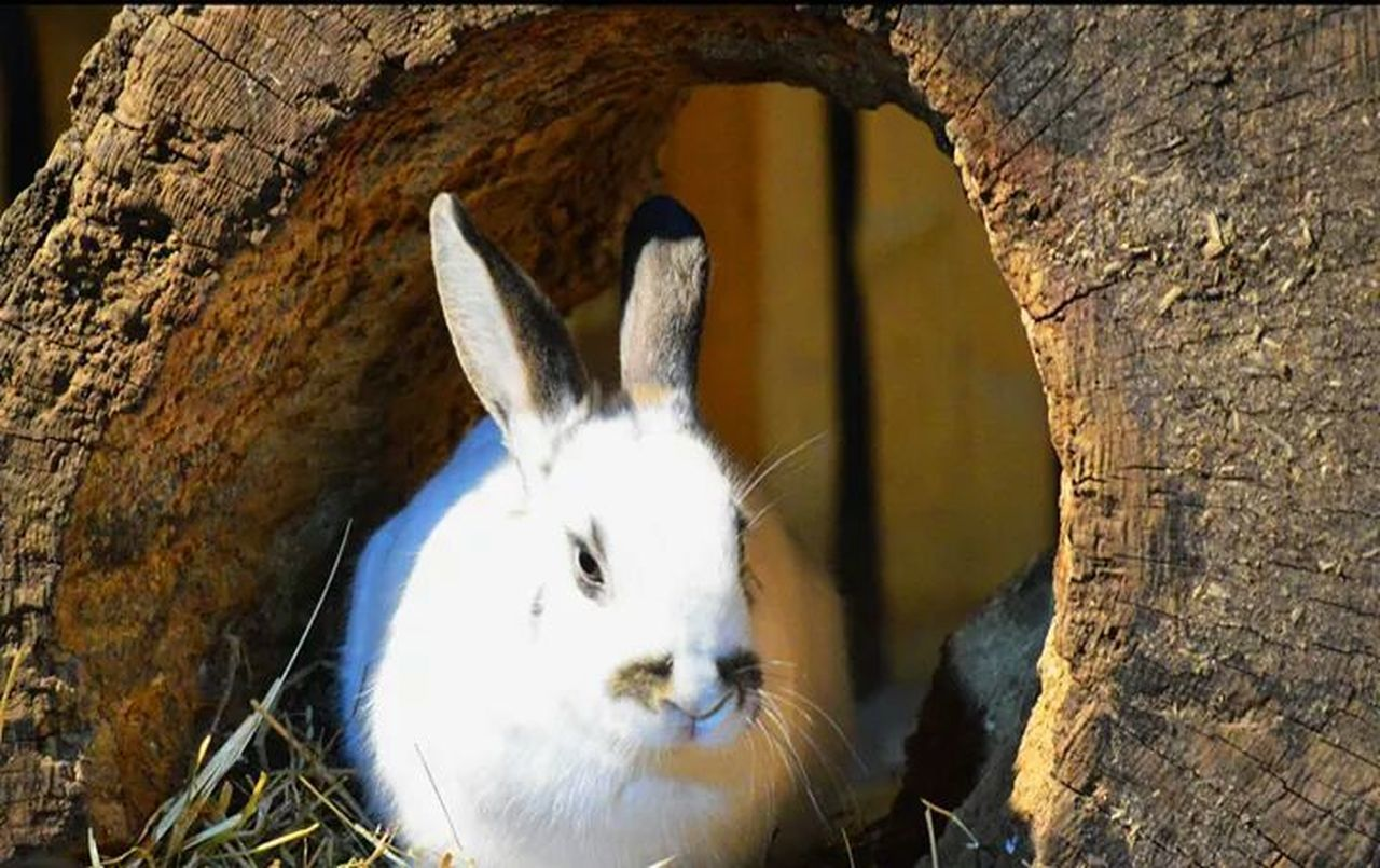 Rabbit Hello World Animals Bunny
