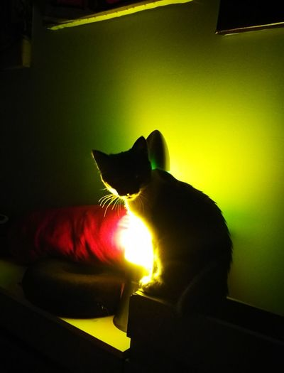 Cat, luz, oscuridad One Animal Domestic Cat Imal Themes Domestic Animals night