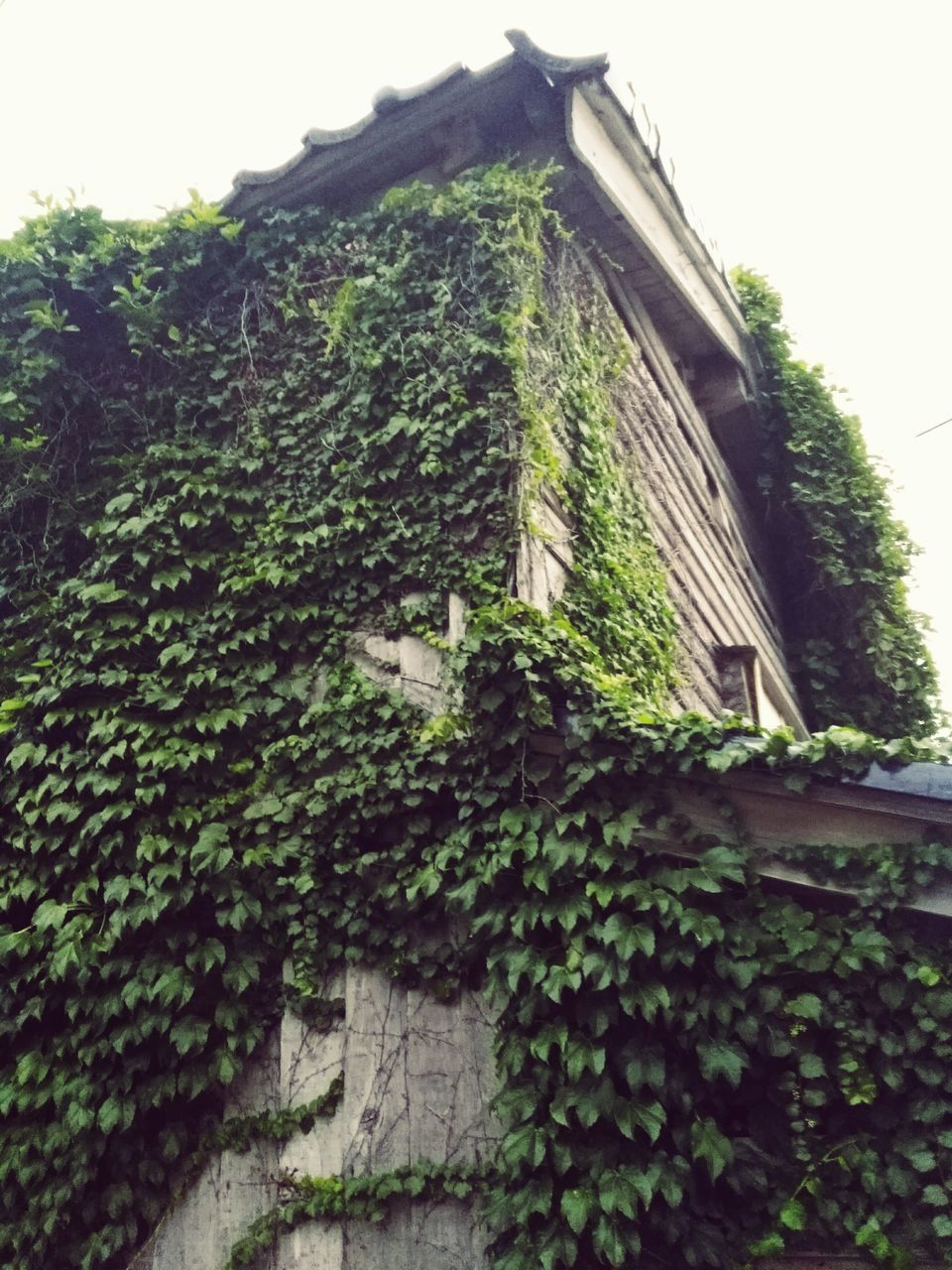 architecture, growth, low angle view, creeper, ivy, built structure, plant, building exterior, tree, no people, green color, overgrown, growing, house, day, outdoors, nature, roof, tiled roof, close-up