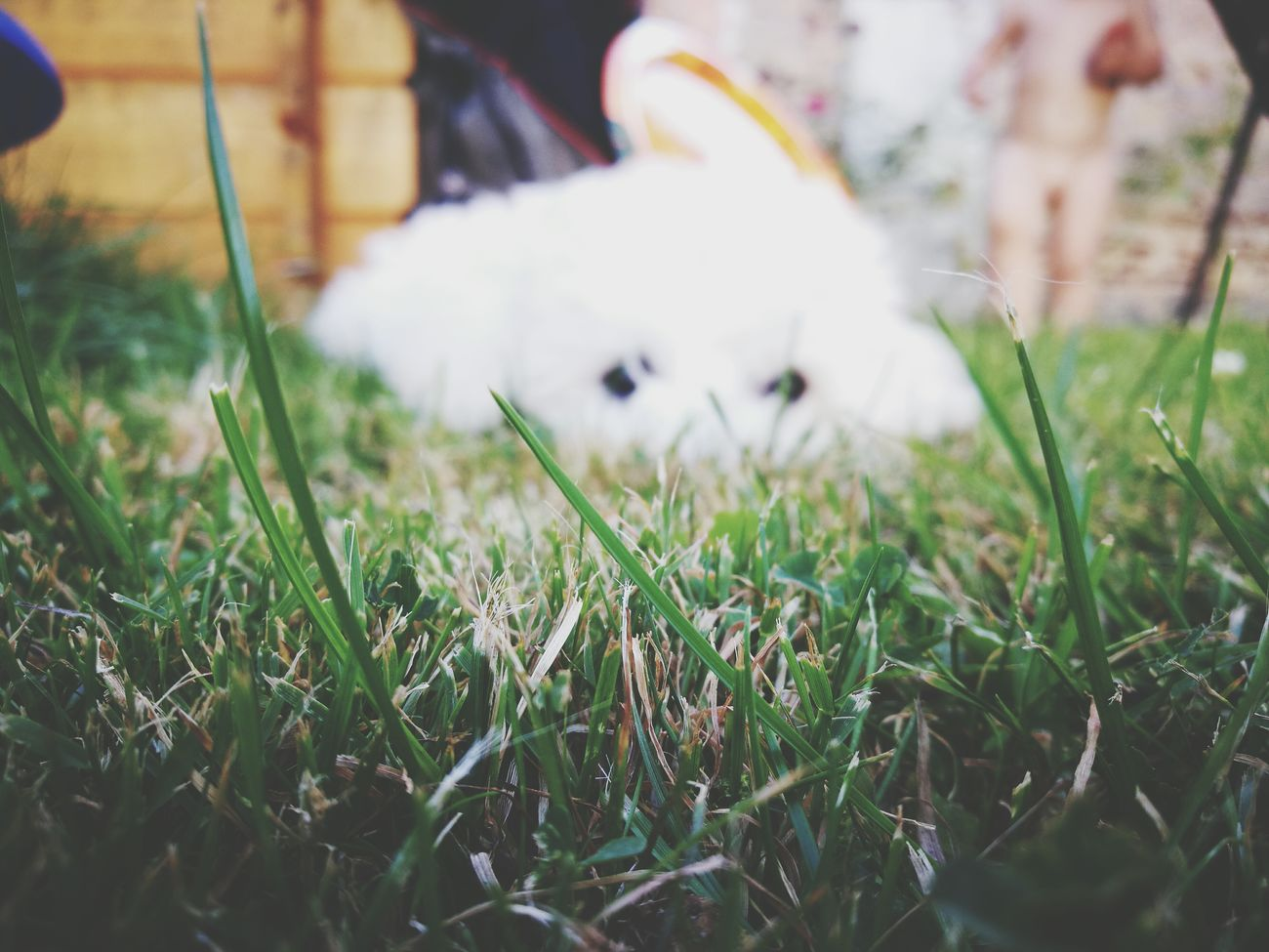 My dog. Hanging Out Check This Out Hello World Relaxing Enjoying Life Followme Cheese! Follow4follow Bichonfrise Dogs Of EyeEm Dogstagram