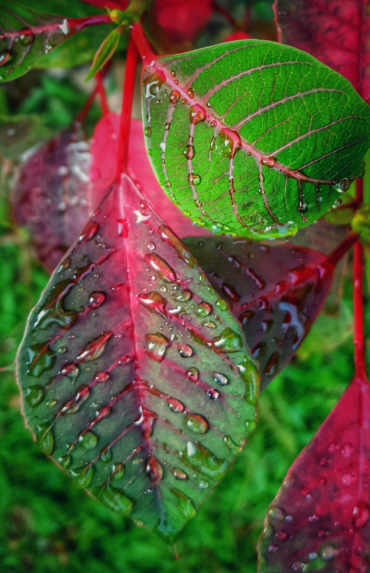 Leaf Nature Close-up Green Color No People Plant Beauty In Nature Outdoors Water Wet Fragility Growth Day Freshness Tree Rain Drops On Leaves