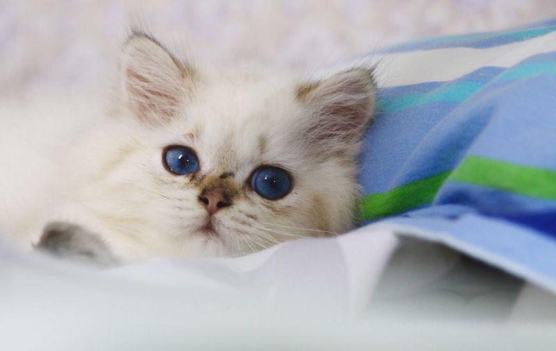@neiner my cat,-shenzhen