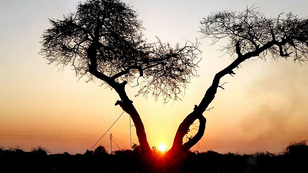 Superb Sunrise LoveNature Morning Sun Tree Branches Mesmorising Natural Scenery Love To Take Photos ❤ @$RG...