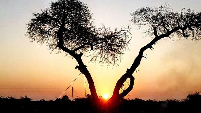 Superb Sunrise LoveNature Morning Sun Tree Branches Mesmorising Natural Scenery Love To Take Photos ❤ @$RG...
