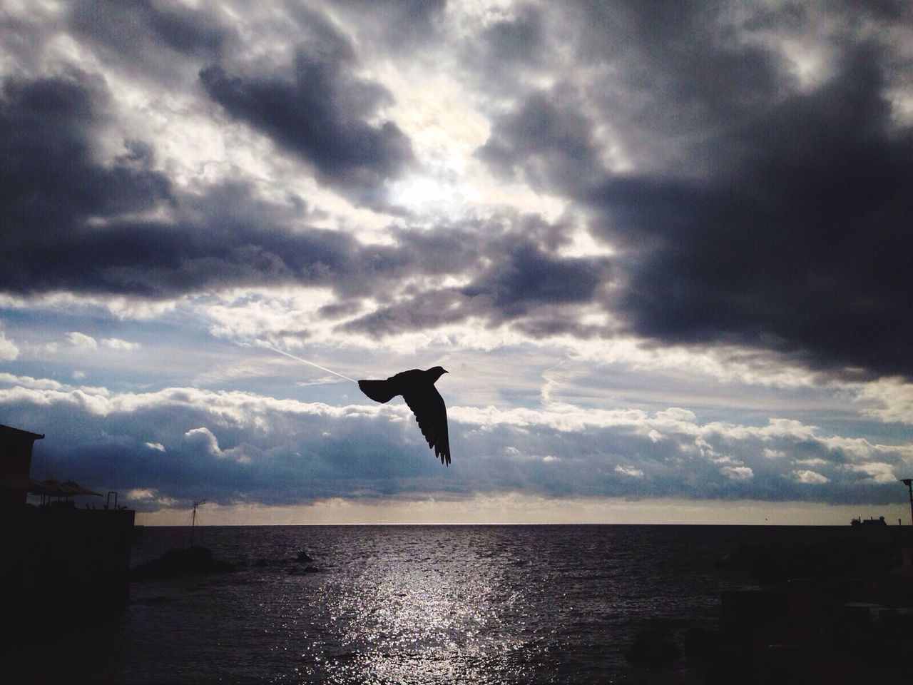 sea, water, nature, silhouette, sky, mid-air, one animal, cloud - sky, flying, animal themes, no people, beauty in nature, outdoors, spread wings, bird, day, animals in the wild, scenics, horizon over water
