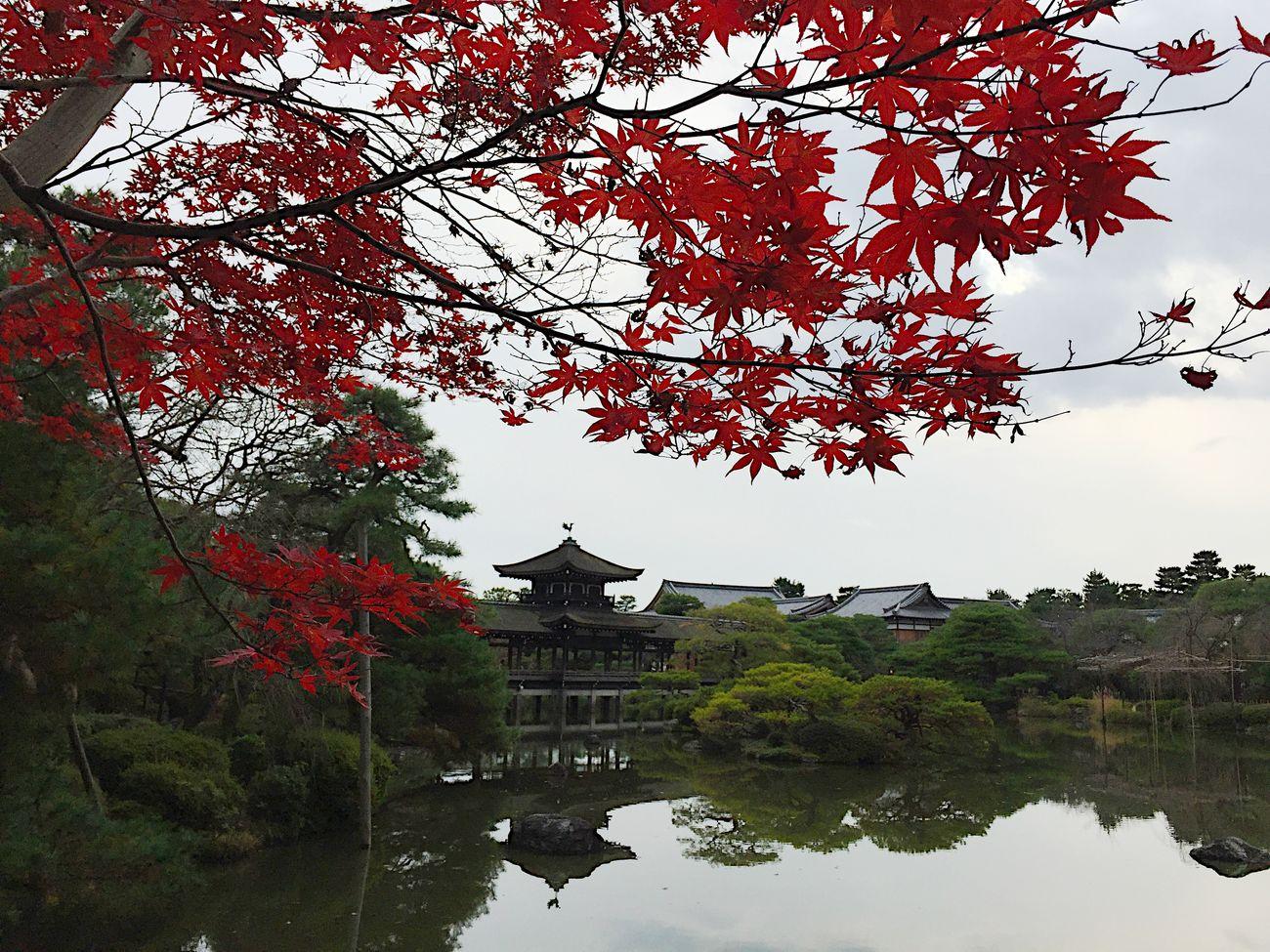 Kyoto 平安神宮 神苑 紅葉 もみじ