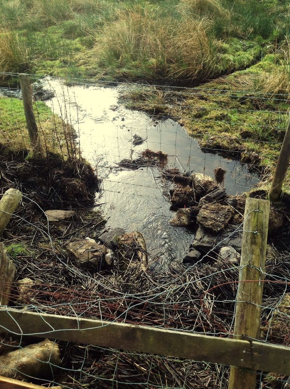 River Brambles Taking Photos Simple. Grass Water Going For A Walk Scenery